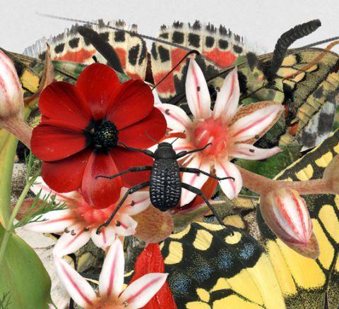 פרחי בר וחרקים בארץ ישראל
